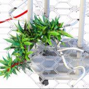 Llega a México la novedosa herramienta de auto-cultivo de Cannabis